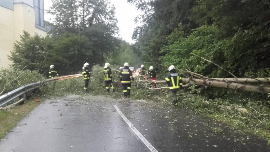 Sturmschäden (01.07.2019)